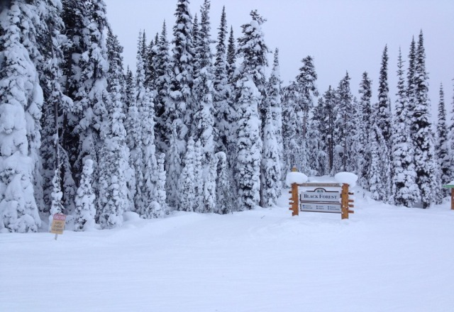 a little bare at the bottom...but still powder to be found!