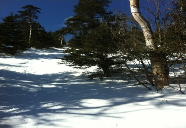 still good snow in trees. icey in the popular ones but fresh untouched powder in most of it.