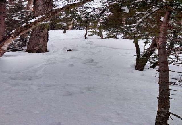 lots of snow really good base