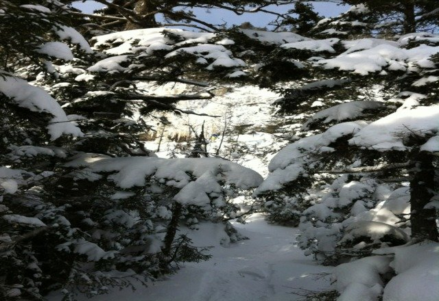 Scratchy in the middle of the intermediate trails. Deep fresh powder in the treez!!