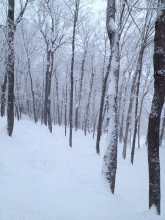 Great Pow today! Nice glades!