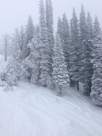 Another great day. Mountain is fully open an has been getting new snow everyday. Hard to beat its conditions right now