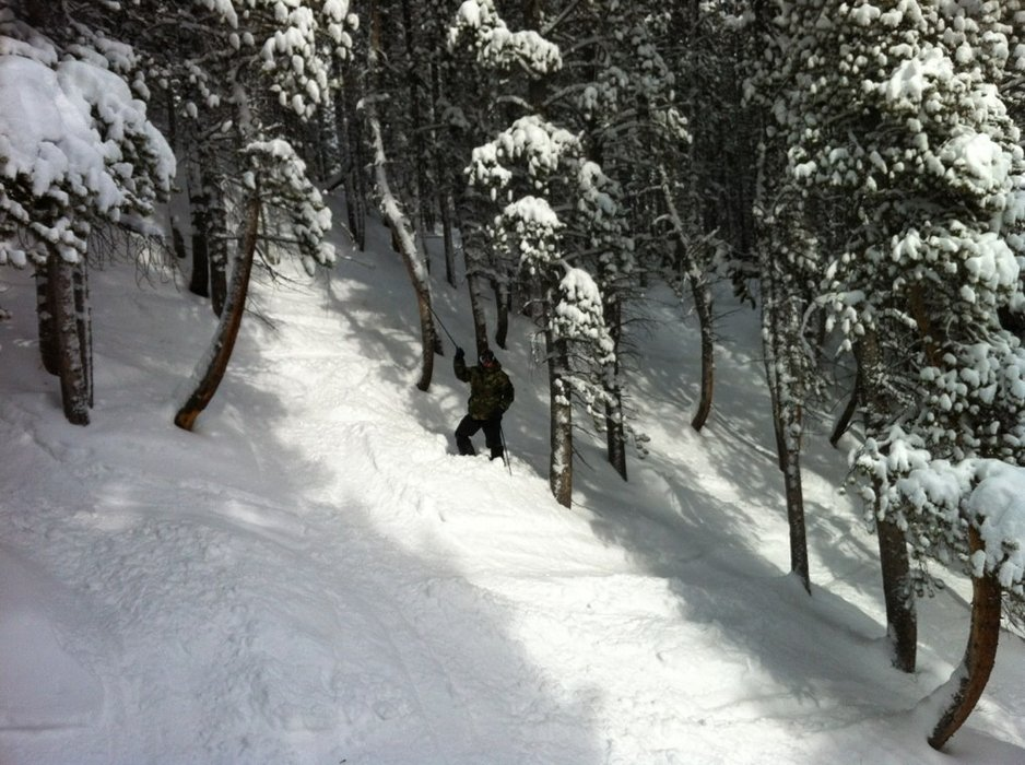 great pow in the trees off papoose