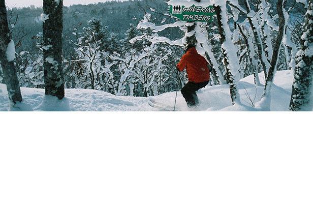 Powder glade skiing at Mount Bohemia