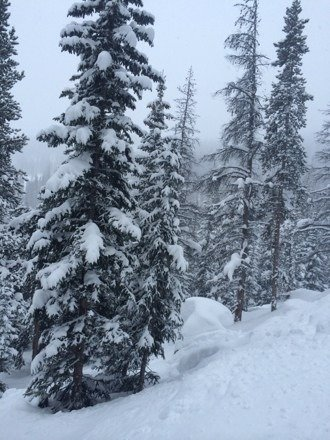 Tree pillows all day long @ Mary Jane. Thanks Broncos for keeping the crowds down!