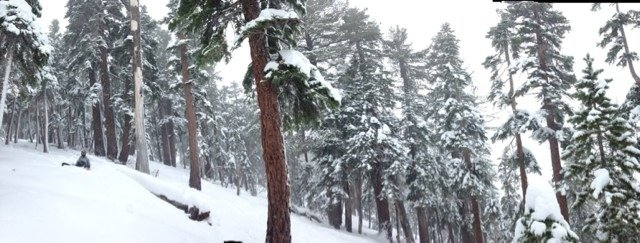 Nice powder in the trees yesterday after getting some good snow overnight.