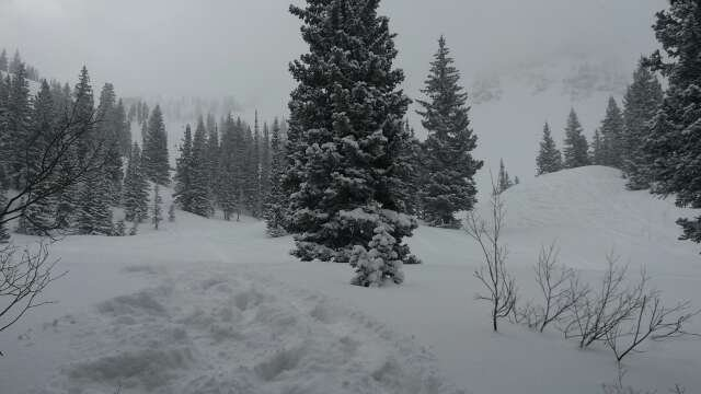tons of new pow pow, freshies all day... bast day ever, shredding like never before! live theis mountain!!