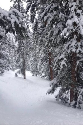 Fantastic conditions! So much powder in the trees - awesome in the wolf den and on the north peak. Epic day!