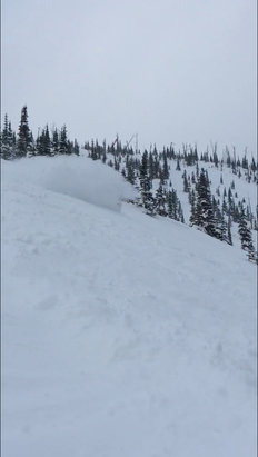 Castle Mountain - Epic powder day today.  - ©Darbie