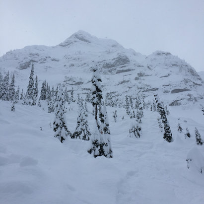 Fernie Alpine - Was still hitting knee to waist deep fresh powder at 3 pm yesterday off cedar bowl. #blueberry - ©Jeff Depew's iPhone