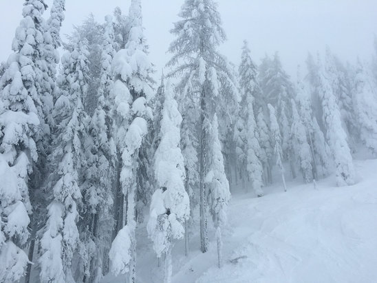 49 Degrees North - Great day, lots of powder and not at all crowded!  - ©Boaz's iPhone