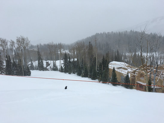 Deer Valley Resort - Blowing snow, light fresh snow---colder than earlier. Nice skiing next to and in the trees. 1
