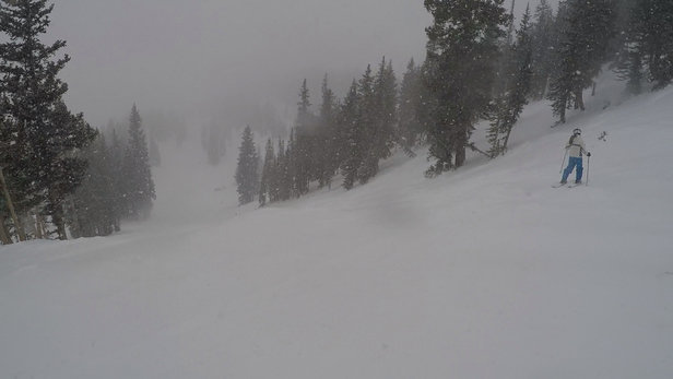 Alta Ski Area - Awesome today. Started snowing pretty good after noon. Road up and down is slow so plan ahead - ©SRee