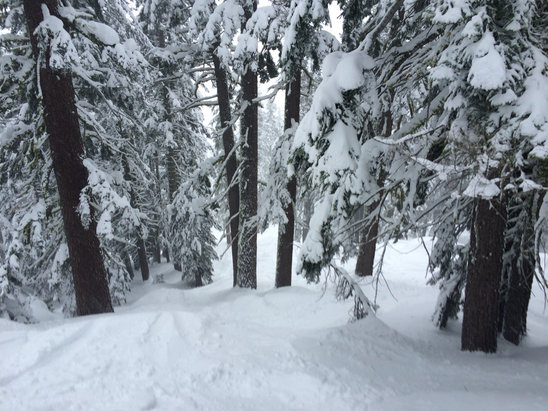 Sierra-at-Tahoe - Still some fresh to be found, conditions excellent, roads clear! - ©HPhone