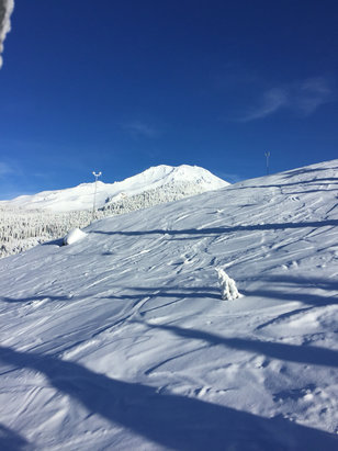 Mount Shasta Board & Ski Park - Great early morning pow pow   - ©Blake Iphone