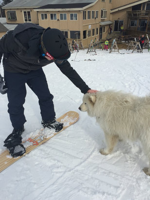 Bousquet Ski Area - First time at Bousquet. Decent size mountain for the price. Not all trails were open but there was plenty of terrain to have a good time. Not crowded at all for a Saturday!! We also got to meet this adorable dog.  - ©Steph