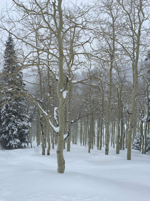 Deer Valley Resort - Empty powder day... - ©Michael's iPhone