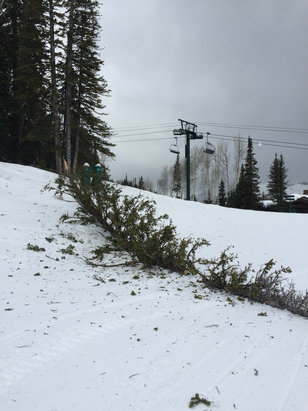 Deer Valley Resort - Trees down all over.  - ©iPhone