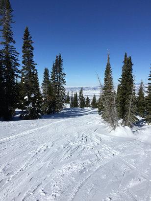 Steamboat - Great skiing all week nice little 3