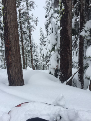 Sierra-at-Tahoe - Found some untapped pow wow! Keeps coming down. - ©SnoPanda