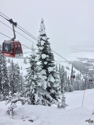 Jackson Hole - Really gnarly powder all over the mountain. You can't go wrong with any run.  - ©Gus's 5S Black 64GB