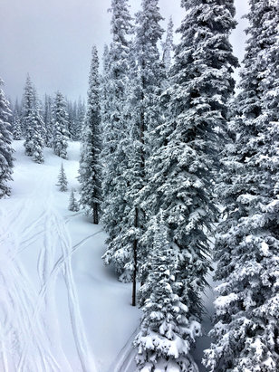 Steamboat - How can you complain about current conditions. Tree skiing conditions are at an incredibly high level.  Ski the trees folks. 6