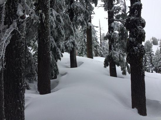 Mt. Bachelor - 4/24 3