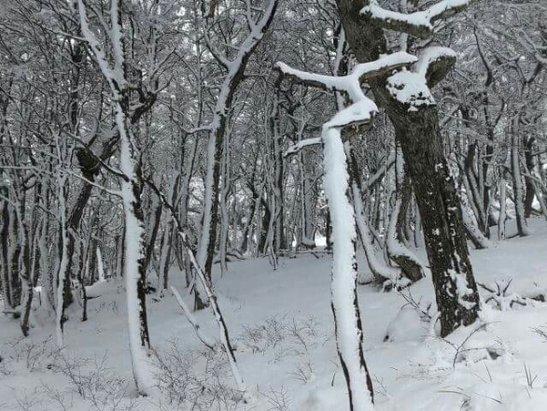 Cerro Castor - Firsthand Ski Report - ©martin.curioni