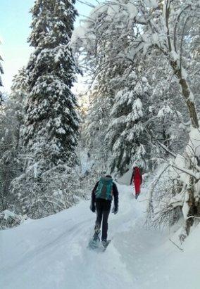 Col de Porte - premières chutes de neige importantes de l'année.   idéal pour les skis de rando et les raquettes.  départ skis aux pieds pour chamechaude ou le charmant som.  - ©alex