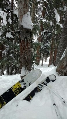 Keystone - The Outback was the gnar today. So much gnarpow at the stone your gnarbles will fall out. Get out there. - ©Seth