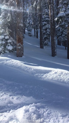 Wolf Creek Ski Area - Fresh powder!!  - ©Bianca's iPhone