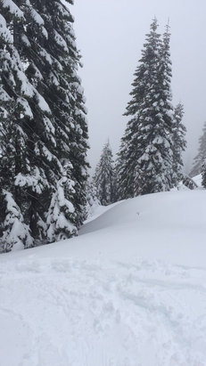 Mt. Shasta Ski Park - Not too many people plenty of fresh pow - ©Nolan's iphone