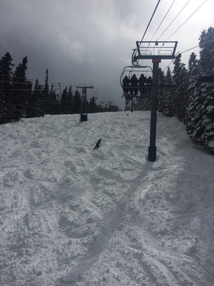 Taos Ski Valley - Great day of ski today!!! - ©iPhone carla