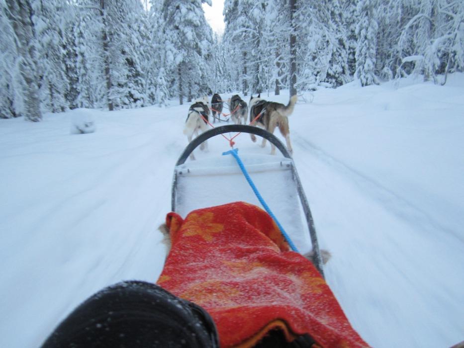 Dog sledding in Lapland - ©Patrick Thorne