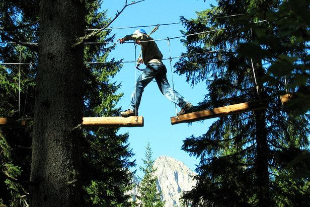 Adventure Park Agility Forest
