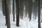 by anonymous user - Decent fresh powder with