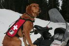Videos: Avalanche dogs to the rescue