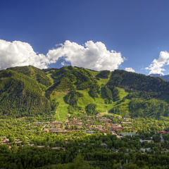 Aspen in the Summertime