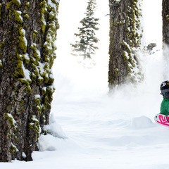 Enjoying powder in the trees