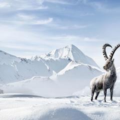 150 Jahre Wintertourismus: Graubünden feiert die Tradition und blickt in die Zukunft