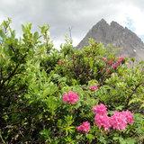 Sommer in der Bergwelt von Imst - ©© Tirol Werbung