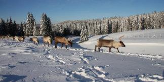 Tour du monde hivernal sans quitter le Doubs... ©Gilles Malloire