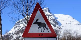 Escapade ski dans les Alpes de Lyngen (Norvège) - © Eric Beallet
