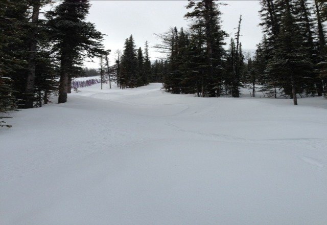Pleasantly surprised to find new snow in the glades. Enjoyed laying some fresh track.
