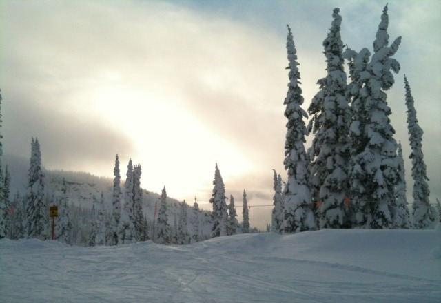 Great weather, lots of powder in the tree's.