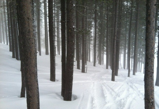 Decent fresh powder with some untracked stashes still in the trees.