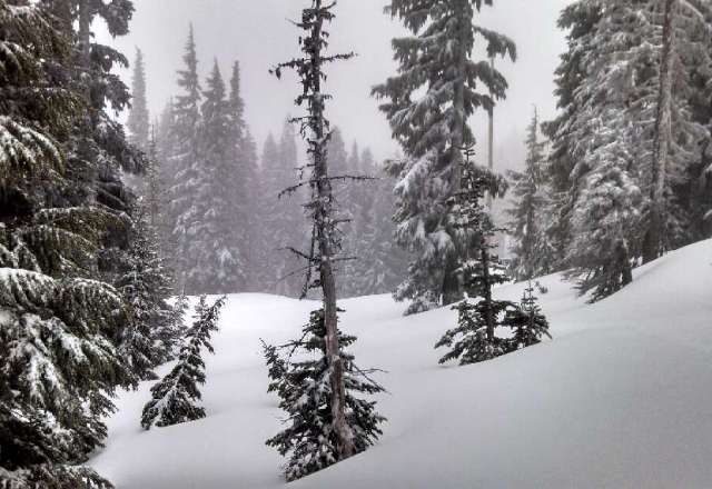 Awesome light dry powder. Pockets of untouched all day. Pic is between Pucci and Molly's. Sat 4/13