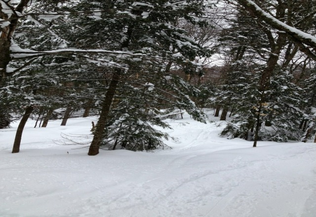 the trees are fun and full of fresh snow. hit preacher if and the glades for a great time!
