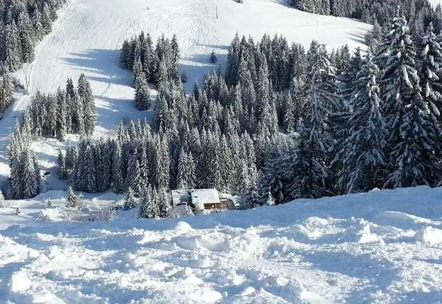 lots of fresh snow!