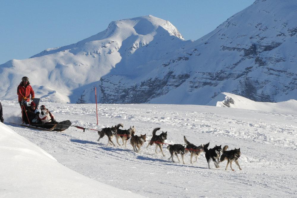 """Ambiance """"grand-nord"""" et balade en chiens de traineaux sur le plateau de Rocherousse à Orcières - © Gilles BARON"""